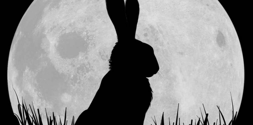 Watership Down remake coming soon from Netfix and BBC